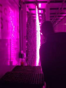 hydroponics pic 4
